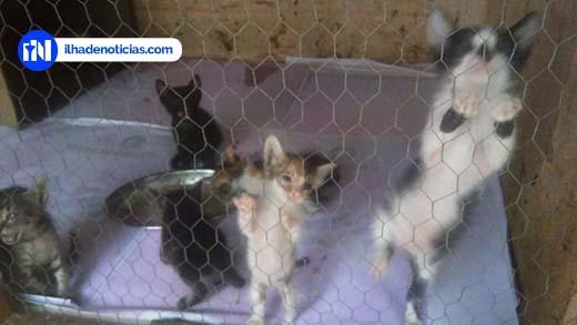 Mais de 20 gatos são abandonados em um só dia em abrigo de animais