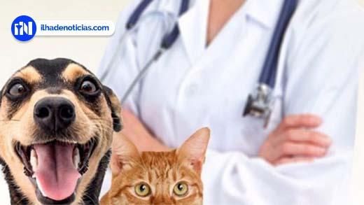 Prefeitura firma parceria com faculdade de veterinária para mutirão de castração de cães e gatos